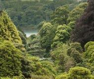Vue au-dessus des jardins de Trebah Photographie stock libre de droits