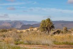 Vue au-dessus des montagnes de mamie Canaria, de la paume isolée et des dunes dans le premier plan photographie stock libre de droits