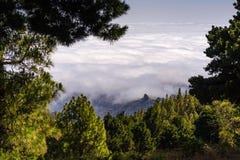 Vue au-dessus des nuages, pins dans le premier plan, mamie Canaria photo stock