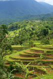 Vue au-dessus des terrasses de riz de Jatiluwah dans Bali, Indonésie Images stock