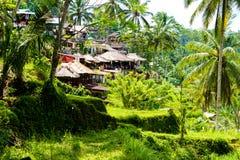 Vue au-dessus des terrasses de riz de Tegallalang près d'Ubud, Bali, Indonésie Image libre de droits