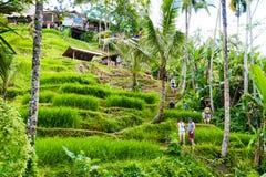 Vue au-dessus des terrasses de riz de Tegallalang près d'Ubud, Bali, Indonésie Image stock