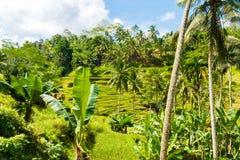Vue au-dessus des terrasses de riz de Tegallalang près d'Ubud, Bali, Indonésie Photos stock