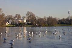 Vue au-dessus du lac au parc de régents à Londres Image libre de droits