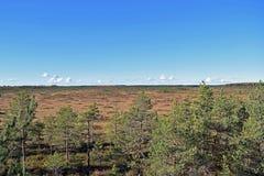 Vue au-dessus du marais Photographie stock