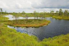 Vue au marais de Kemeri, Lettonie Photo libre de droits