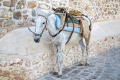Vue aux chevaux photos stock