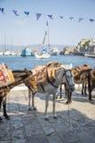 Vue aux chevaux image libre de droits