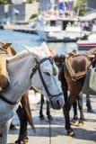 Vue aux chevaux images libres de droits