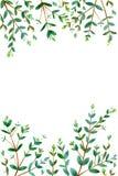 Vue avec des branches d'eucalyptus illustration de vecteur