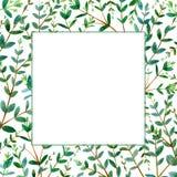 Vue avec des branches d'eucalyptus Frontière florale verte illustration de vecteur