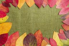 Vue avec des feuilles d'automne Photographie stock