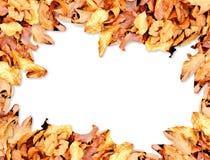 Vue avec des feuilles d'automne images libres de droits