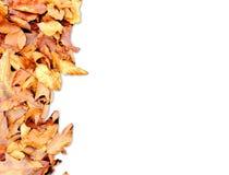 Vue avec des feuilles d'automne photo stock