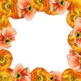 Vue avec des fleurs Photographie stock libre de droits