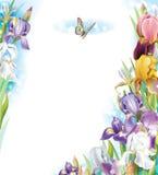 Vue avec des fleurs d'iris Images libres de droits