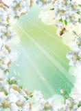 Vue avec des fleurs de cerisier Photo libre de droits