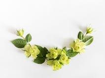 Vue avec des roses, des fleurs vertes et des feuilles sur le fond blanc Photos libres de droits