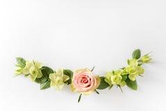 Vue avec des roses, des fleurs vertes et des feuilles sur le fond blanc Photographie stock