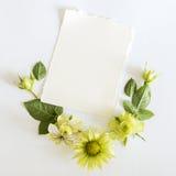 Vue avec des roses, feuilles de fleurs et butterflay verts sur le fond blanc Image libre de droits