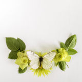 Vue avec des roses, feuilles de fleurs et butterflay verts sur le fond blanc Image stock