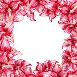 Vue avec l'amaryllis Image libre de droits