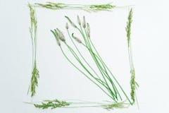 Vue avec l'herbe de champ sur le blanc Photo stock