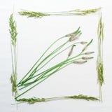 Vue avec l'herbe de champ sur le fond blanc Photos libres de droits