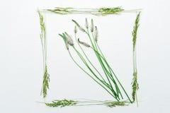 Vue avec l'herbe de champ sur le fond blanc Image stock