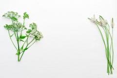 Vue avec l'herbe verte de champ sur le fond blanc Photo libre de droits