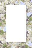 Vue avec la fleur de cerise Photo libre de droits