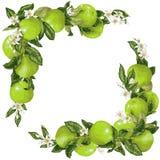 Vue avec le fruit et les fleurs de pamplemousse dans l'illustration de vecteur illustration de vecteur