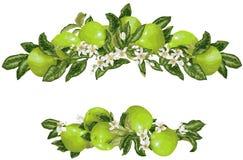 Vue avec le fruit et les fleurs de pamplemousse dans le vecteur illustration de vecteur