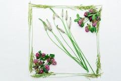 Vue avec le trèfle et l'herbe de champ sur le fond blanc Photographie stock libre de droits