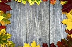 Vue avec les feuilles colorées Photo libre de droits