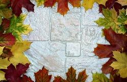 Vue avec les feuilles colorées Photos stock