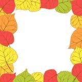 Vue avec les feuilles d'automne lumineuses Images libres de droits