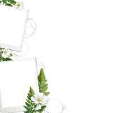 Vue avec les fleurs sensibles Photographie stock libre de droits