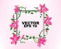 Vue blanche avec la conception de calibre de fleurs d'orchidée Images libres de droits