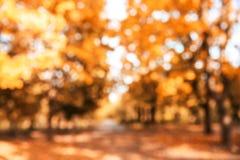 Vue brouillée des arbres avec les feuilles lumineuses en parc photo stock