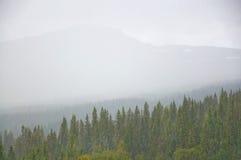 Vue brumeuse de forêt Photographie stock libre de droits