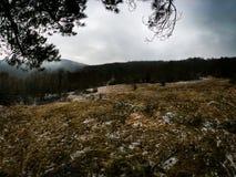 Vue brumeuse de forêt d'une cabane dans un arbre images stock
