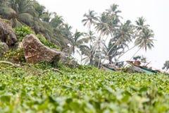 Vue calme de plage de Bentota de matin avec des liserons, des paumes, des roches et des bateaux de pêche photo stock