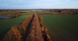 Vue calme de soirée d'automne au-dessus d'allée de bouleau jaune avec la vue sur la petite ville en Europe du nord est clips vidéos