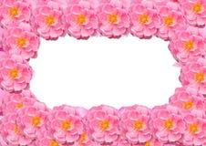 Vue, carte postale des fleurs roses d'isolement sur le fond blanc Photo libre de droits
