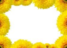 Vue, carte postale des tournesols d'isolement sur le fond blanc Photo libre de droits