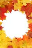 Vue composée de lames d'automne colorées Photo stock