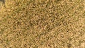 Vue courbe de champ de rizière Photos libres de droits