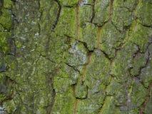 Vue détaillée d'écorce d'arbre Photo stock