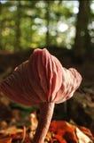 Vue détaillée d'un champignon de couche Image stock